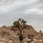 Joshua Tree engagement by Paige Nelson