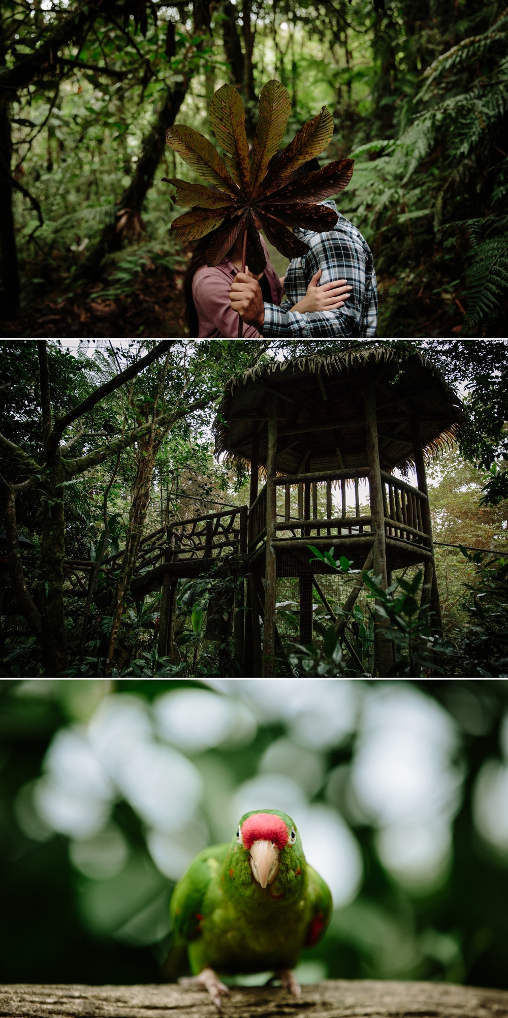 La Paz Waterfall Garden and Peace Lodge by Paige Nelson