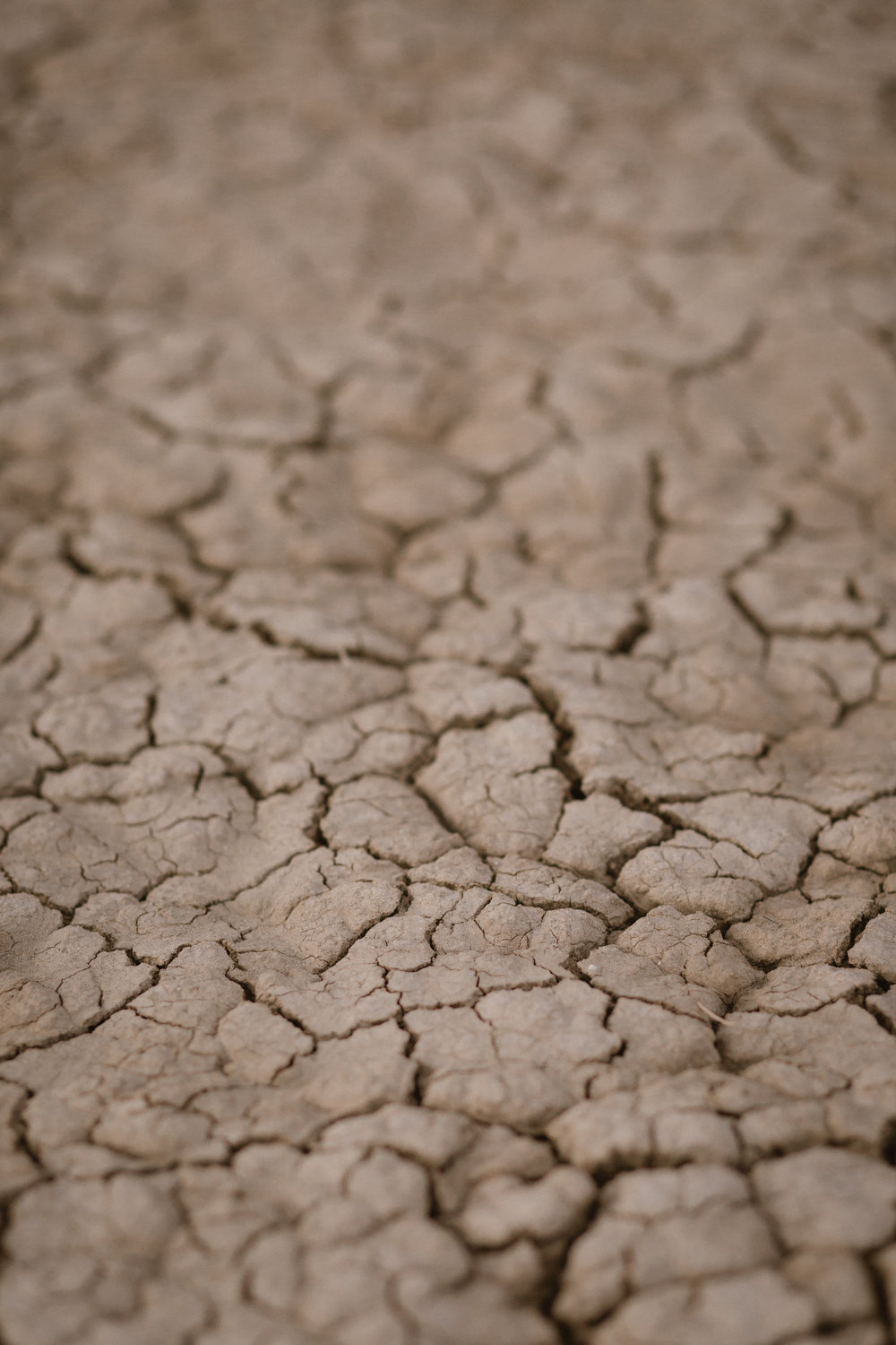 Dry Lake bed surface in Anza Borrego, San Diego