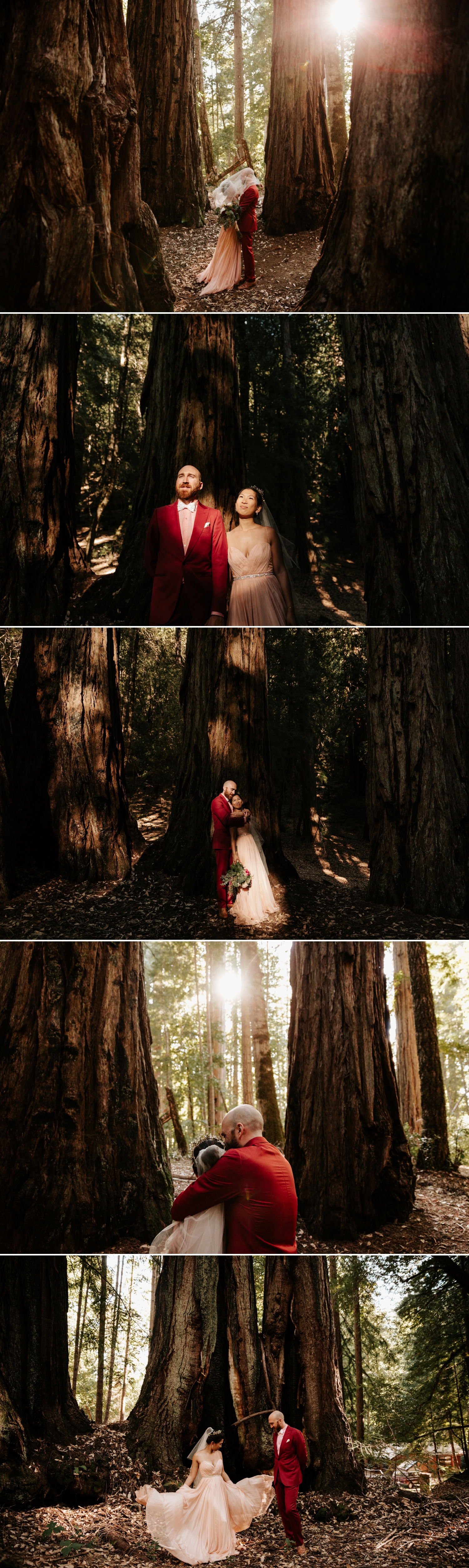 Redwood wedding in Northern California by Paige Nelson Photography