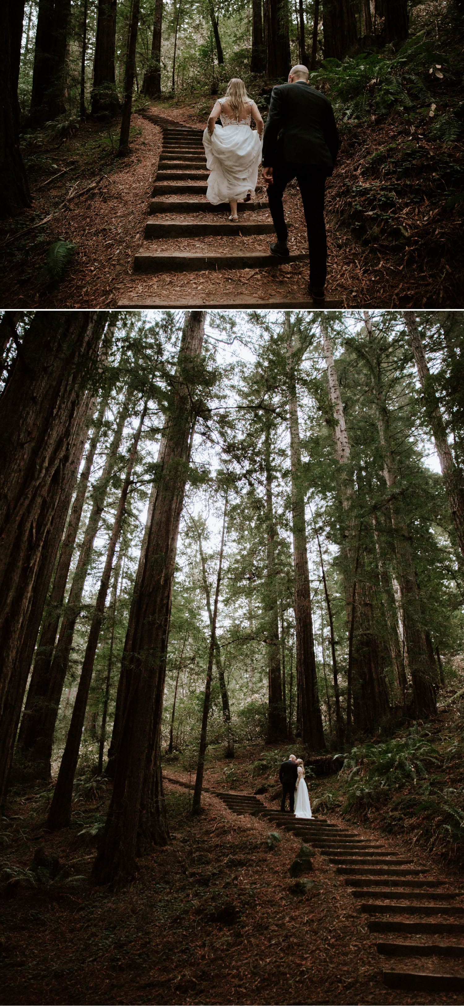 Redwood elopement at Muir woods National Monument