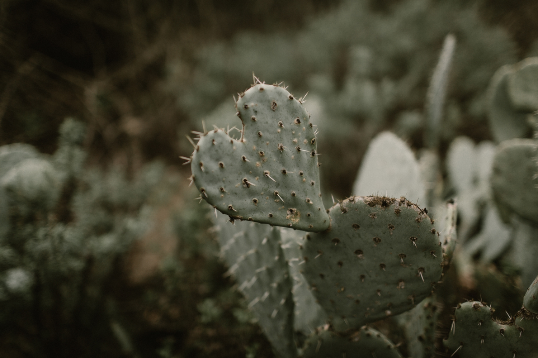 Cactus at Oak Canyon Nature Center in Orange, CA