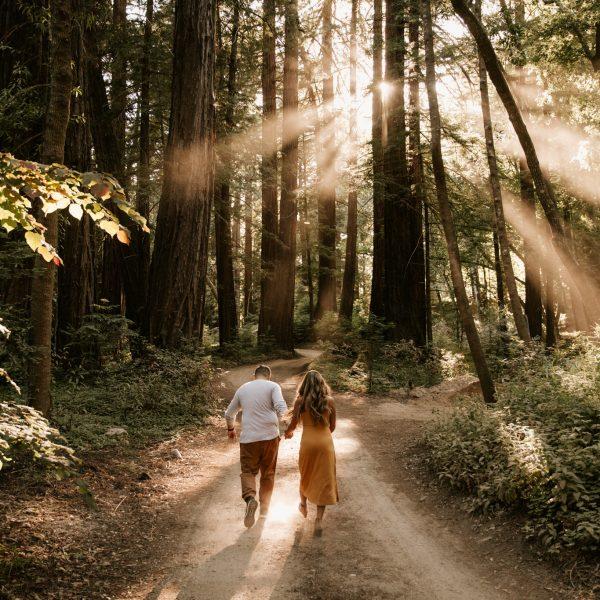 Redwood Forest & Coastal Engagement in Big Sur