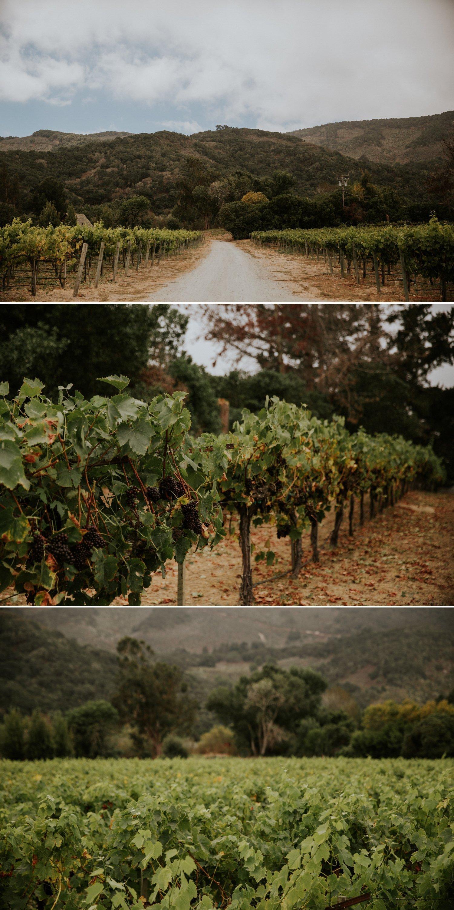 Vineyard wedding Folktale Winery Carmel