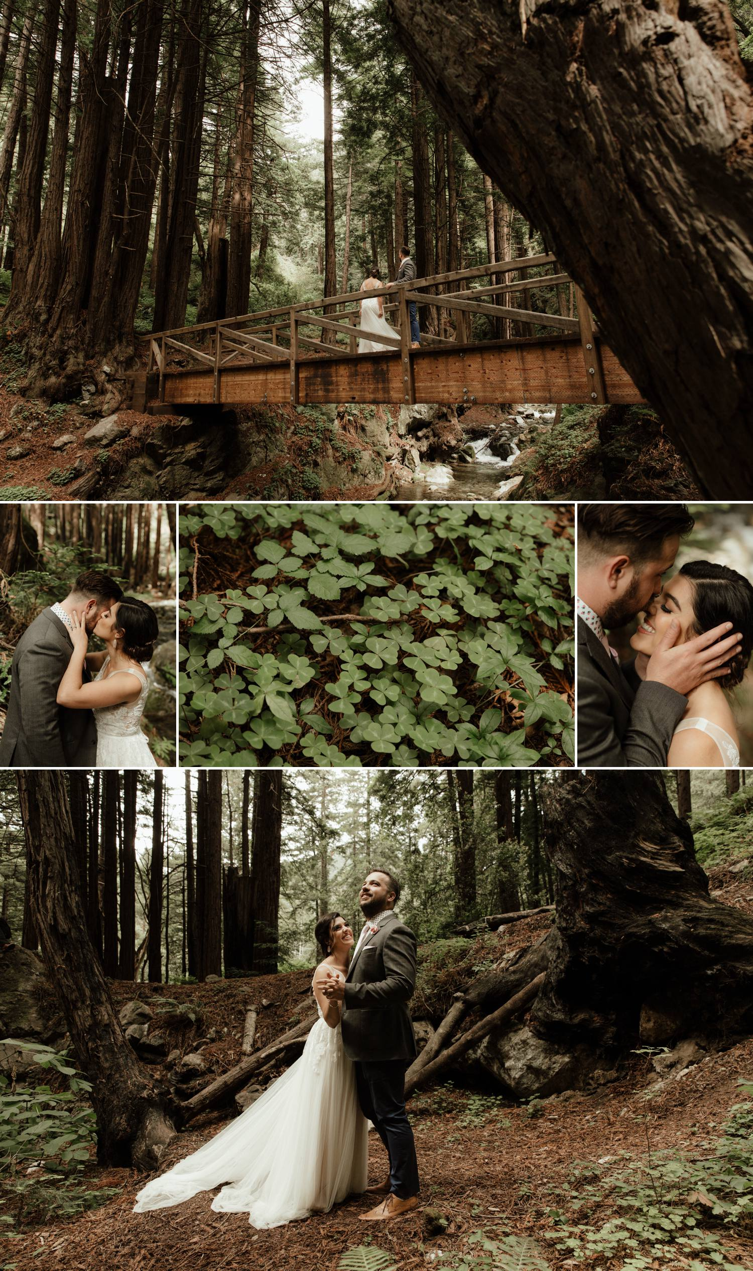 big sur redwood forest romantic