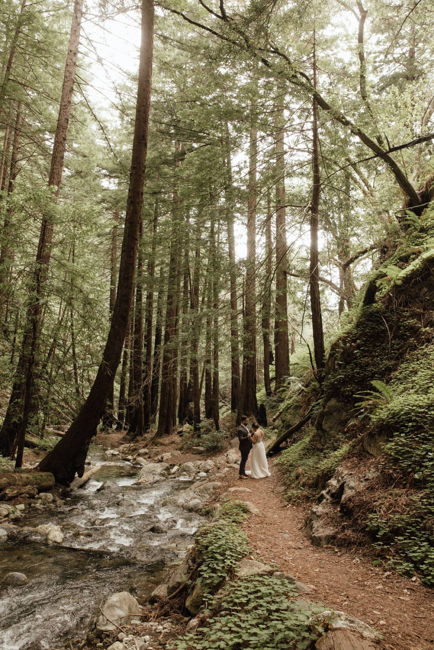 big sur redwood forest elopement